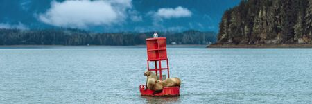Alaska nature wildlife sea lions banner landscape cruise travel. Stellar seals on buoy in Juneau sleeping in Auke bay. Banque d'images