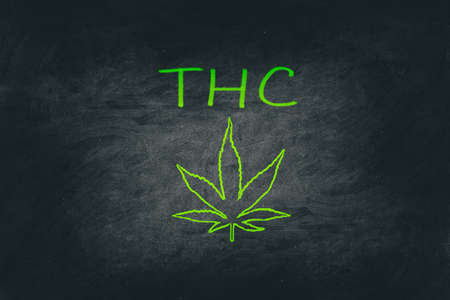 Cannabis blackboard illustration of marijuana leaf with chalk on chalkboard billboard texture - Store THC. THC is the main psychoactive compound in marijuana.