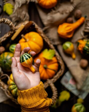 woman hold small pumpkin in hand opposite the assorted small colorful pumpkins in wicker straw basket on rustic wooden thanksgiving table on sackcloth