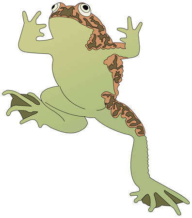 Jumping Frog Illustration