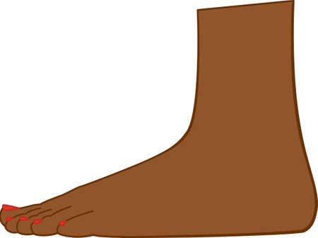 Fuß Standard-Bild - 7596365