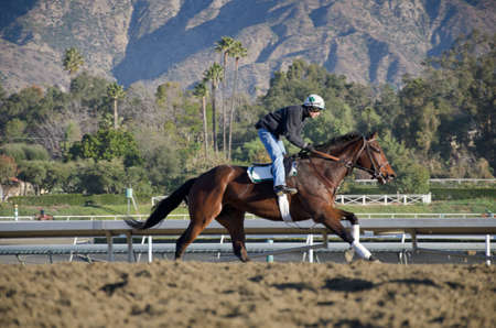 Arcadia, California, USA - December 29, 2011 - Behind the scenes, morning work outs with the race horses before the park opens and the spectators are admitted.