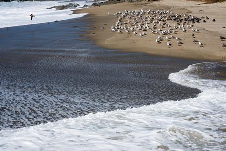 Seagulls at the beach. Stock Photo
