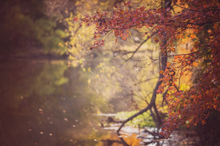 Fall and Autumn landscape scenery with a lake and colorful trees and leaves photo