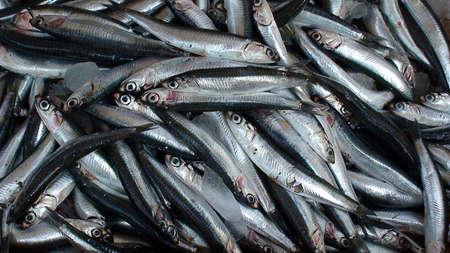 display of sardines in a Greek market