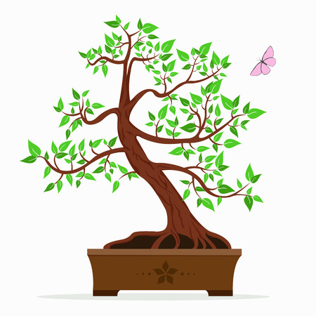 asian gardening: Vector illustration of bonsai tree on a white background