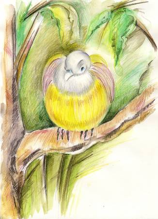 beck: Yellow bird - drawing with watersoluble pencils