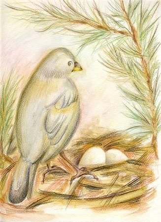 beck: Birds nest - drawing with watersoluble pencils