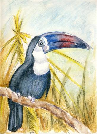 beck: Toucan - drawing with watersoluble pencils