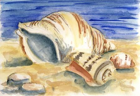 clam illustration: Shells - an original watercolor painting