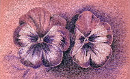 An illystration of two pansies with colored pencils. Stok Fotoğraf
