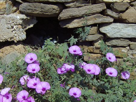 Purple flowers and rocks 2 Stok Fotoğraf