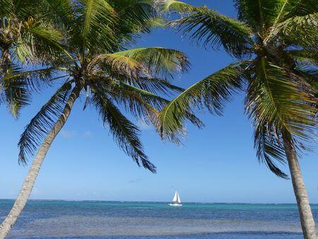 Ambergris Caye, near San Pedro, Belize, tropical beach with palm tree Foto de archivo