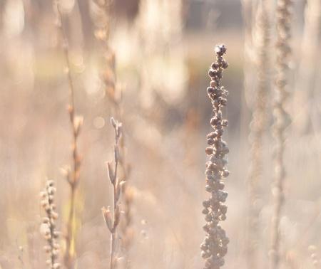 Field plants in a bright sun light Stock Photo - 12458607