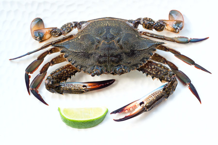 Raw blue crab before cooking, lying on a white plate with a lime slice. Over white background