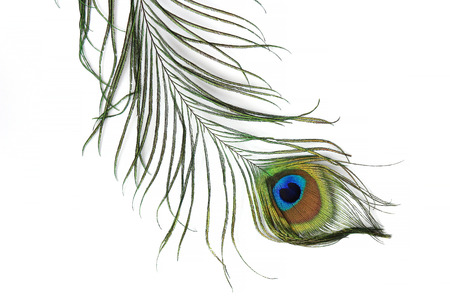 pluma de pavo real: Pluma de pavo real aislados sobre fondo blanco Foto de archivo