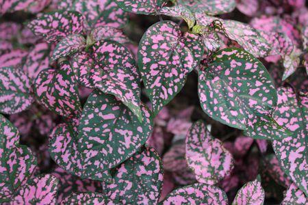 purpule: plants red purpule and green