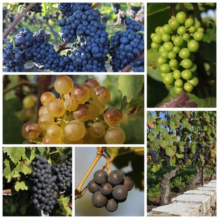 purpule: grapes purpule and green and white