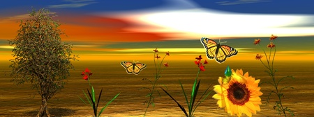 sky and flowers and butterfly photo