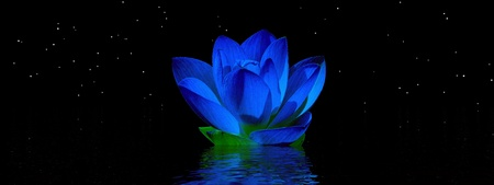 water lily blue and sky photo