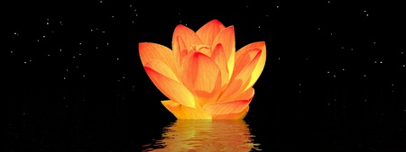 water lily orange and sky photo