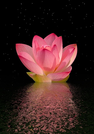 water lily pink and sky