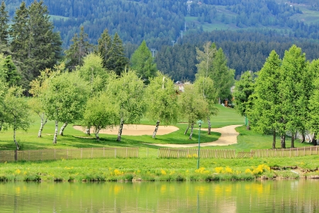 trees and golf and forest photo