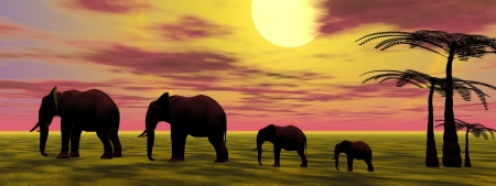 elephants and sunrise photo