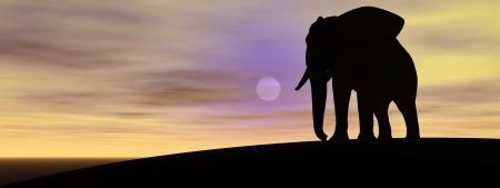 elephant and sun photo
