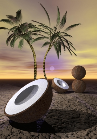 foreshortening: palms and coconut