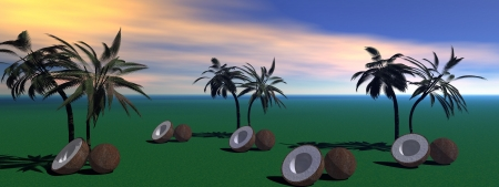 palms and coconut photo