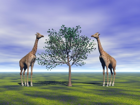 giraffe and trees photo