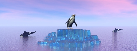 killer whale, orca, penguin Stock Photo - 16798709