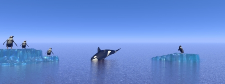 orca and penguin photo