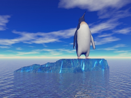 penguin and sky blue photo