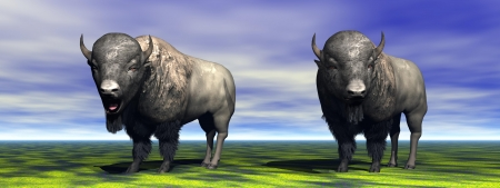 Two bisons which observe photo