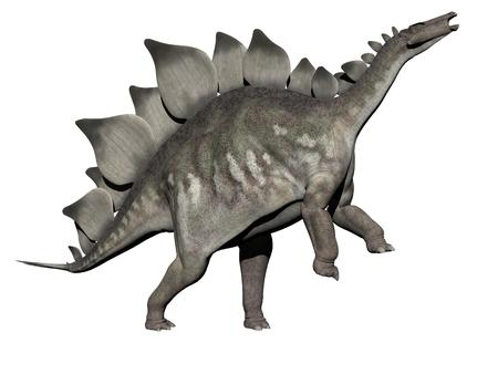 흰색 배경 -3d 렌더링에서 stegosaurus 공룡