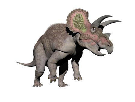 triceratops: triceratops dinosaur in white background - 3d render Stock Photo
