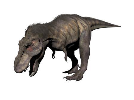 tyrannosaurus: tyrannosaurus dinosaur in white background - 3d render