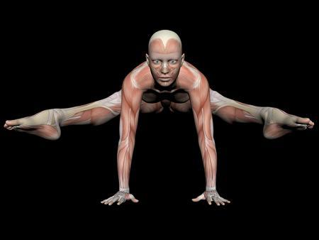 tendon: woman anatomy figure position - 3d render