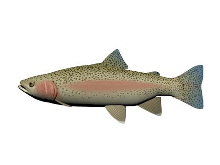 fish type: steelhead fish pink and blue it isolated in white background Stock Photo
