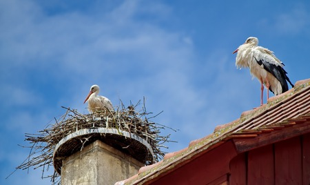 stork in a nest and another walking on the roof and sky blue Stock Photo