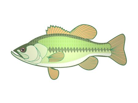 Fish on a white background - 3d rendering Banque d'images