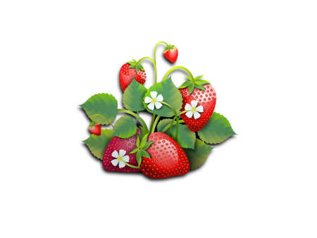 Several strawberries with leaves on white
