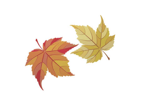 autumn leaves on white background - 3d rendering