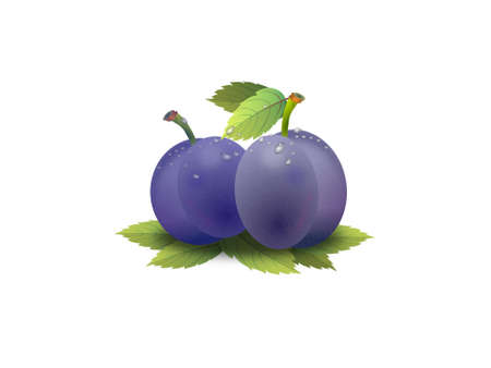 very beautiful prunes on white background - 3d rendering Banque d'images
