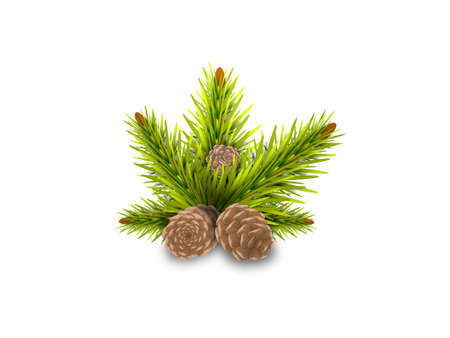 pine cones on white background - 3d rendering