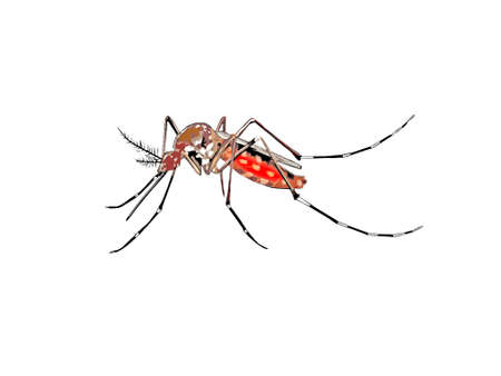 tiger mosquito on white background - 3d rendering