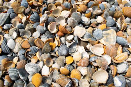 Seashells and clams on coastal sands 免版税图像
