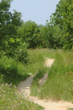 Hiking path through a meadow with bushes